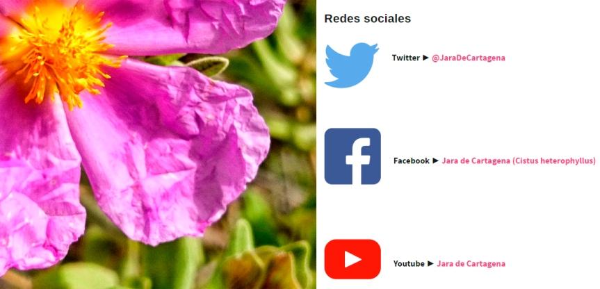 El proyecto para conservar la jara de Cartagena está presente en redessociales