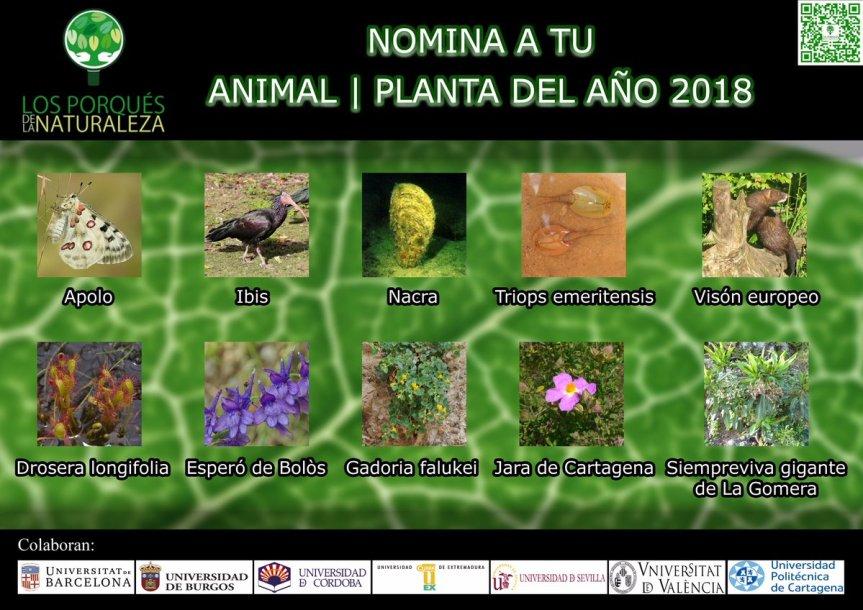 PlantaAño2018