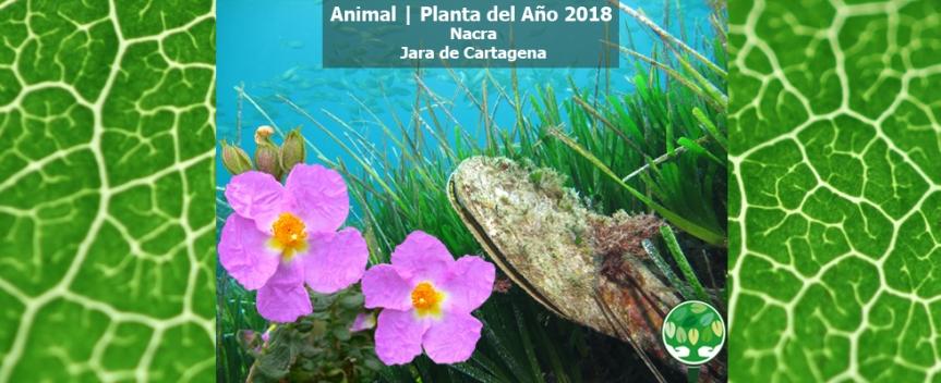 ¡La jara de Cartagena se proclama Planta del Año2018!